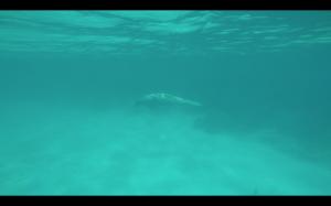 Screen Shot 2014-10-30 at 8.39.51 PM